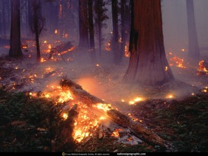 sequoia-forest-fire-505503-lw